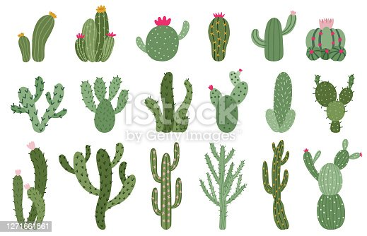Cute cactus. Succulents and cacti flower, green prickly desert house plants, tropical home plants isolated vector illustration icons set. Flora of different size and shape for hot climate