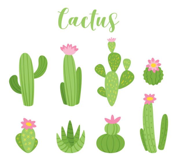 stockillustraties, clipart, cartoons en iconen met schattig cactus vectorillustratie - cactus