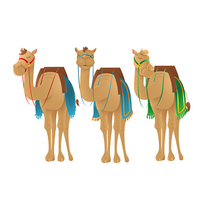 Cute camels dromedary - vector illustration isolated on transparent background
