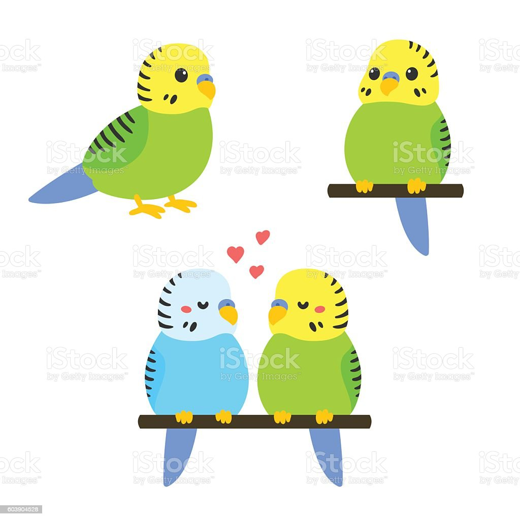 royalty free parakeet clip art vector images illustrations istock rh istockphoto com green parakeet clipart