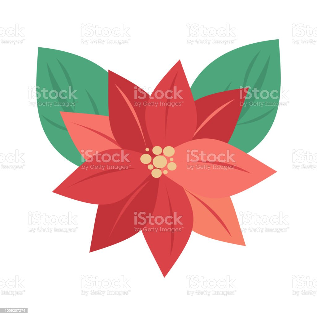 cute cartoon christmas flower poinsettia vector illustration isolated on a white background. vector art illustration