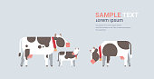 cute cartoon cows farm domestic animals husbandry grazing cattle concept flat gray background horizontal copy space vector illustration