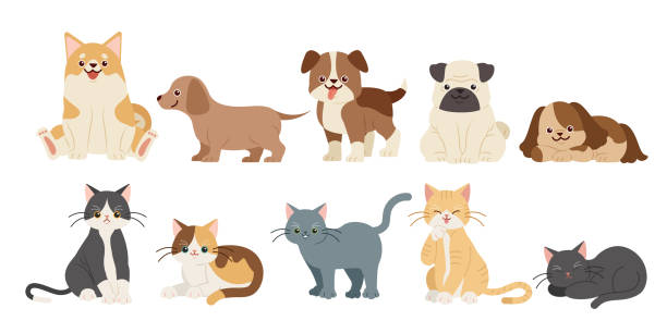 ilustraciones, imágenes clip art, dibujos animados e iconos de stock de lindos perros de dibujos animados y gatos - mascota