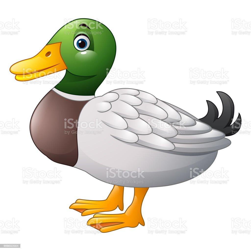 Top 60 Mallard Duck Cl...