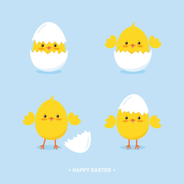 stockillustraties, clipart, cartoons en iconen met schattige cartoon pasen kuikens in eierschalen platte vectorillustratie - egg