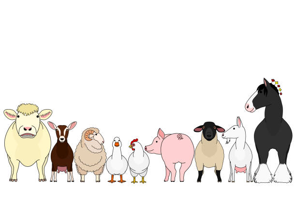 Set Of Farm Animals A Row And A Group Illustrations ...