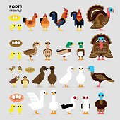 Cute Cartoon Farm Poultry Animals (Hen, Rooster, Brown Common Quails, Female & Male Mallard Ducks, Domestic Ducks, Goose, Muscovy Duck, Male & Female Turkey, also Baby and the eggs of Quail, Chicks, Ducklings, and Gosling in front & side views)