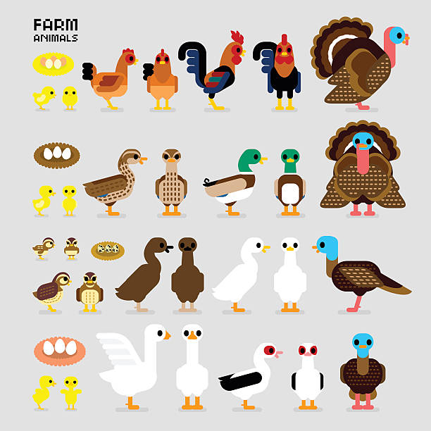 Cute Cartoon Farm Poultry Animals Cute Cartoon Farm Poultry Animals (Hen, Rooster, Brown Common Quails, Female & Male Mallard Ducks, Domestic Ducks, Goose, Muscovy Duck, Male & Female Turkey, also Baby and the eggs of Quail, Chicks, Ducklings, and Gosling in front & side views) rancher illustrations stock illustrations