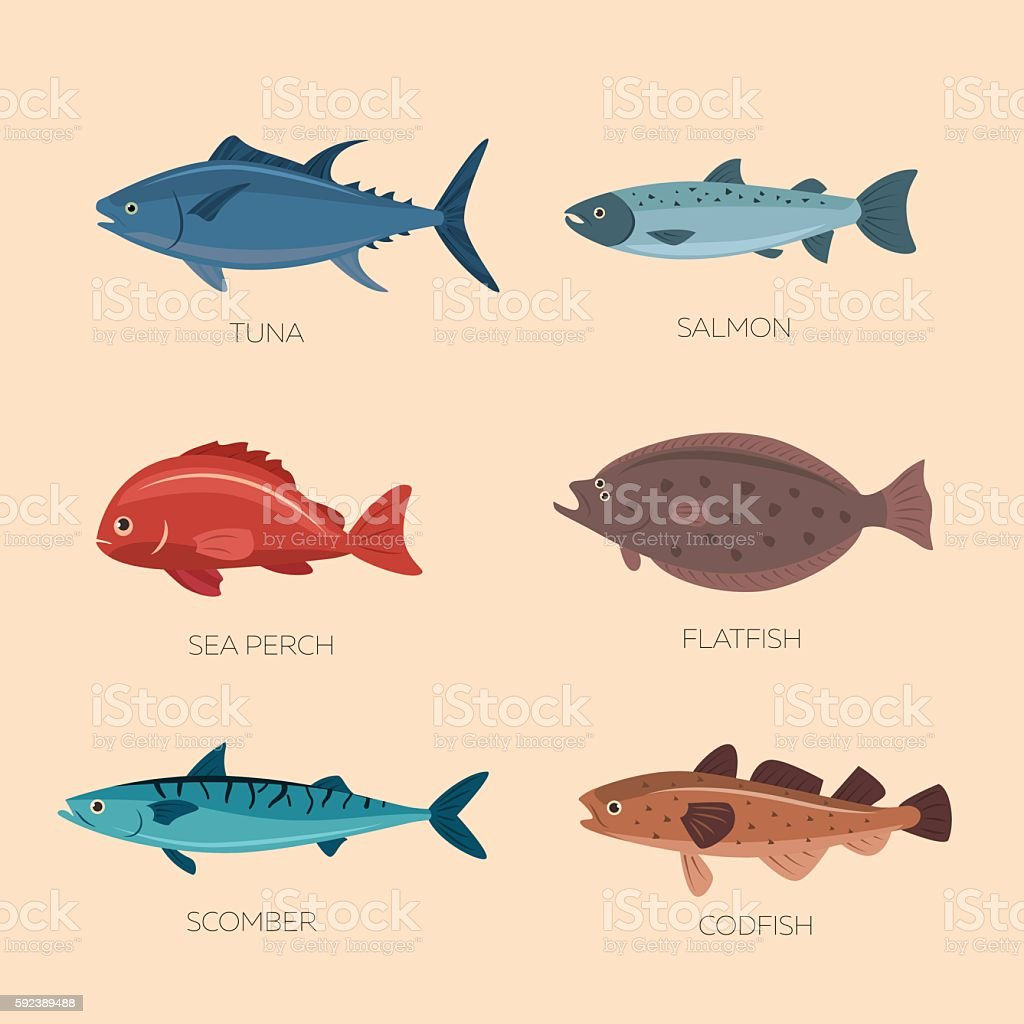 Cute cartoon flat fishes vector art illustration