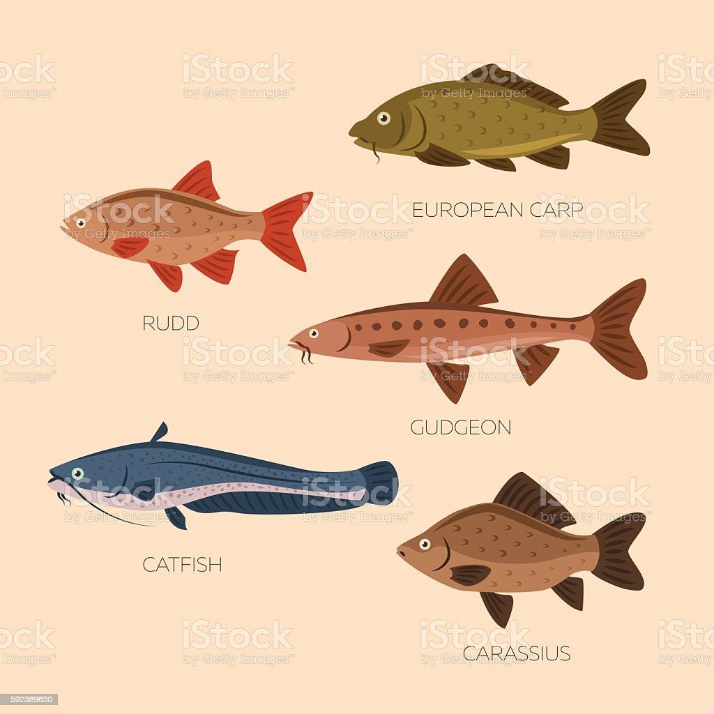 Cute cartoon flat fishes vector art illustration