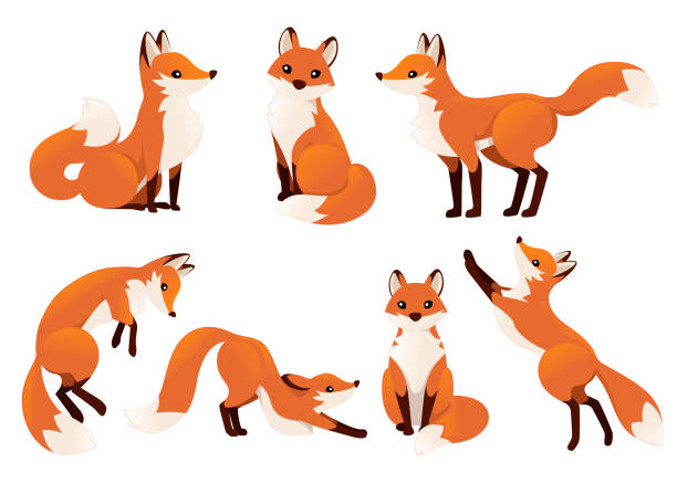 ilustrações de stock, clip art, desenhos animados e ícones de cute cartoon fox set. funny red fox collection. emotion little animal. cartoon animal character design. flat vector illustration isolated on white background - raposa cão selvagem