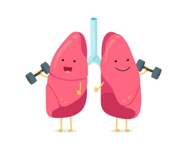 stockillustraties, clipart, cartoons en iconen met leuke cartoon grappige longen karakter met dumbbells. sterke glimlachende long. menselijk ademhalingssysteem gelukkig interne orgel mascotte. medische gezonde anatomie platte vector illusrtation - longen