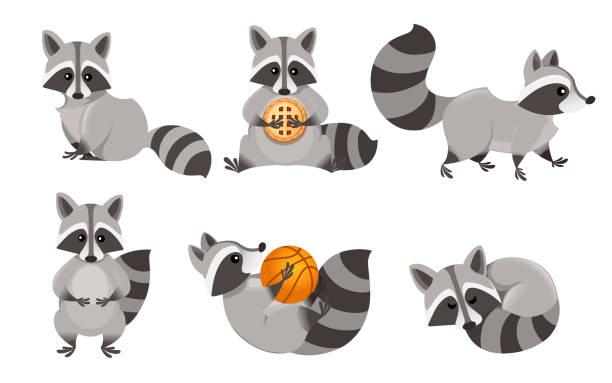 Cute cartoon raccoon set. Funny raccoons collection. Emotion little raccoon. Cartoon animal character design. Flat vector illustration isolated on white background Cute cartoon raccoon set. Funny raccoons collection. Emotion little raccoon. Cartoon animal character design. Flat vector illustration isolated on white background. raccoon stock illustrations