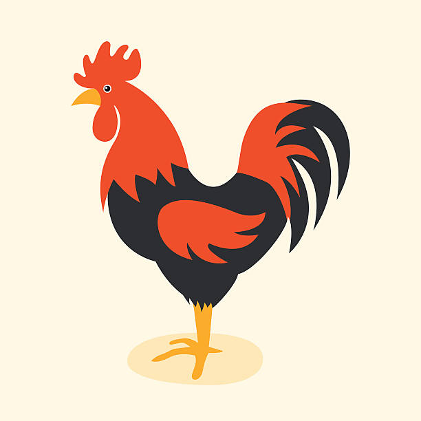 Cute cartoon rooster vector illustration Cute cartoon rooster vector illustration. Cartoon rooster isolated on background. Rooster, cock farm bird. Vector cock farm animal. Cute rooster vector illustration. Rooster farm animal vector. rooster stock illustrations