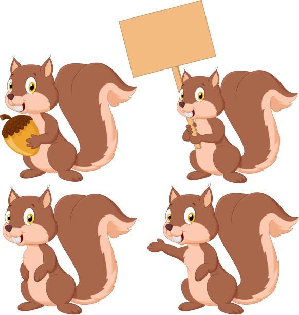 illustrations, cliparts, dessins animés et icônes de écureuil mignon dessin animé ensemble de collection - écureui