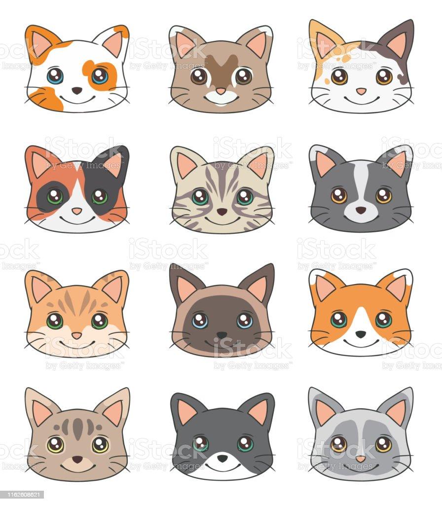 cat heads
