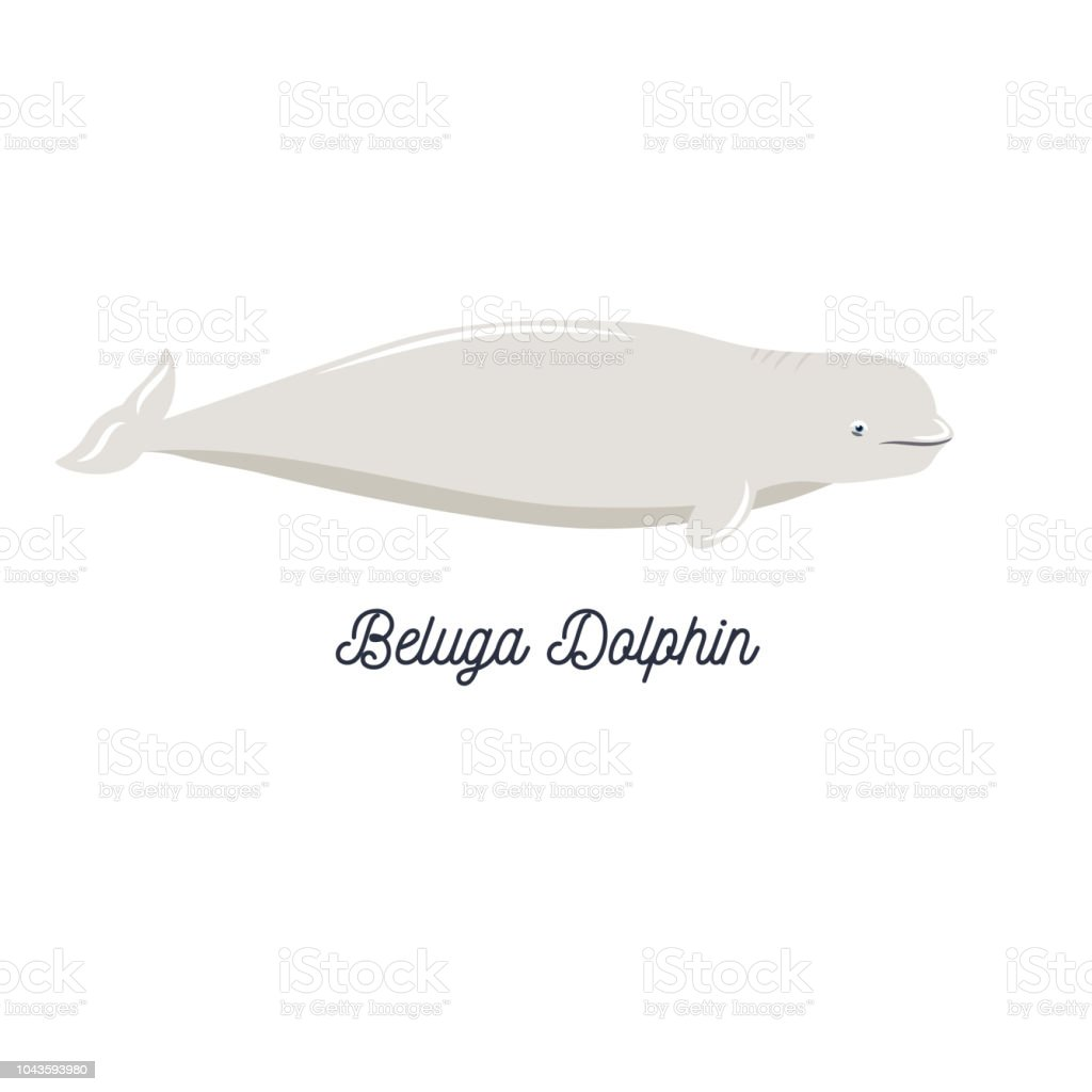 Cute Cartoon Style Icon Of Beluga Whale On White Background With ...