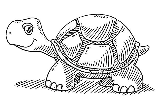 Cute Cartoon Turtle Drawing Hand-drawn vector drawing of a Cute Cartoon Turtle. Black-and-White sketch on a transparent background (.eps-file). Included files are EPS (v10) and Hi-Res JPG. turtle stock illustrations