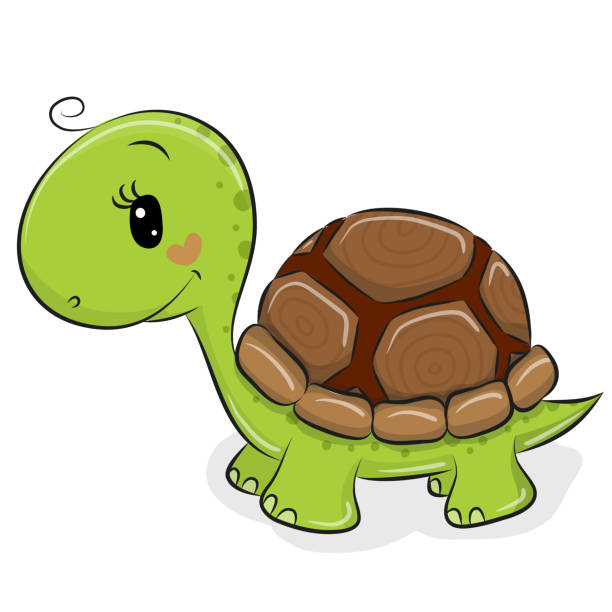 195 Terrapin Turtle Drawing Illustrations Royalty Free Vector Graphics Clip Art Istock