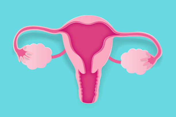 cute cartoon uterus cute cartoon uterus on the blue background uterus stock illustrations