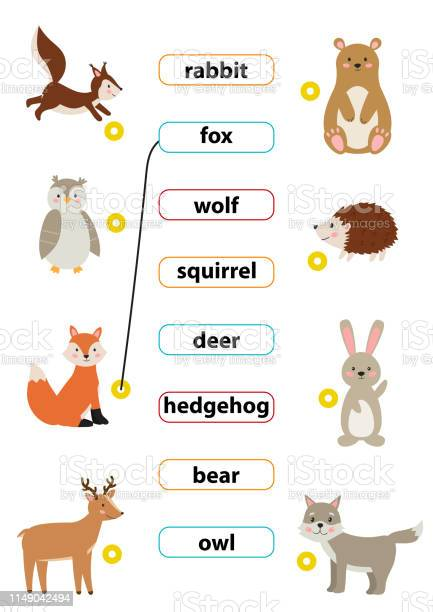 Cute Cartoon Vector Forest Animals Match Words With The Correct Pictures Learn English Words For Preschool Kids Activity Worksheet Stock Illustration Download Image Now Istock
