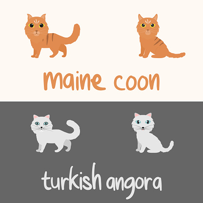 Cute Cat Breeds Cartoon Animal Illustration Type of Maine Coon and Turkish Angora To Background or Wallpaper