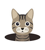 cute cat on the hole,watching  vector illustration