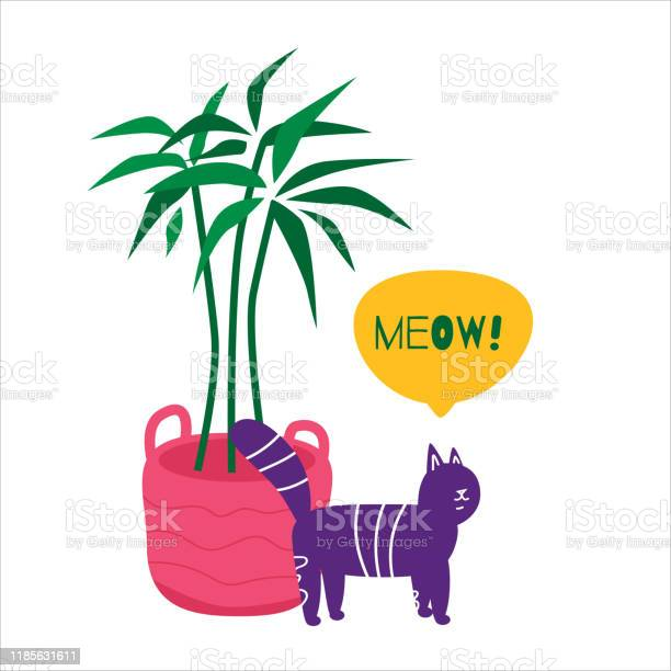 Cute cat stand near palm in pink basket and meowing vector id1185631611?b=1&k=6&m=1185631611&s=612x612&h=gztif242a r5bbb6vrpuw0t0uhgsudbpiqz 7lsop 4=