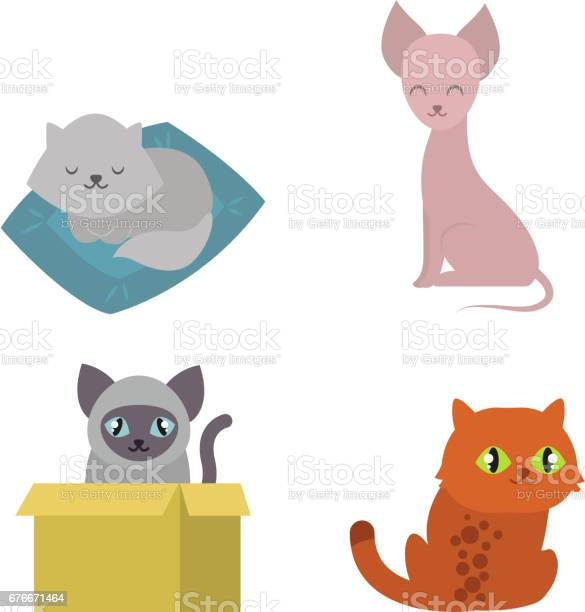 Cute cats character different pose funny animal domestic kitten vector id676671464?b=1&k=6&m=676671464&s=612x612&h=prvmmfeqr4smjhvgkjre5xpw9tl97ni8vsz26mm2b6y=