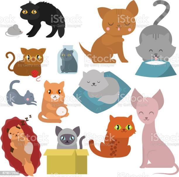 Cute cats character different pose funny animal domestic kitten vector id679072536?b=1&k=6&m=679072536&s=612x612&h=rr1 aivpnmhxcorltbuc21gp3mnm6efcwqiiywu5amq=
