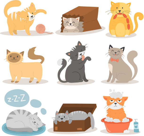 cute cats character different pose vector set - cat stock illustrations, clip art, cartoons, & icons