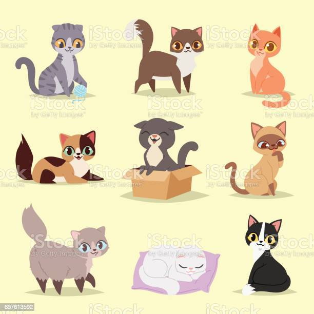 Cute cats kitty pet adorable character different pose vector home vector id697613592?b=1&k=6&m=697613592&s=612x612&h=svhim0hotnjuuphkudyiip gbv0a7njnj m4uc51ihm=