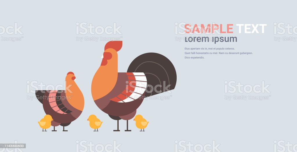 cute chicken family cartoon hen cock and chick domestic birds animals...