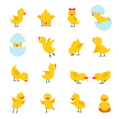 Cute chicks. Cartoon easter baby chickens with eggs. Funny yellow chick vector isolated characters