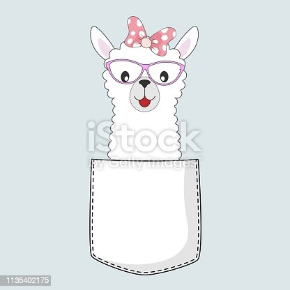Cute cool baby llama girl in the pocket isolated on blue background.