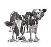 Stipple illustration of Cute cows with funny facial expressions