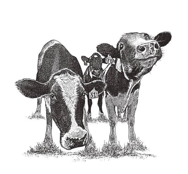재미 있는 얼굴 표정으로 귀여운 소 - 소 stock illustrations