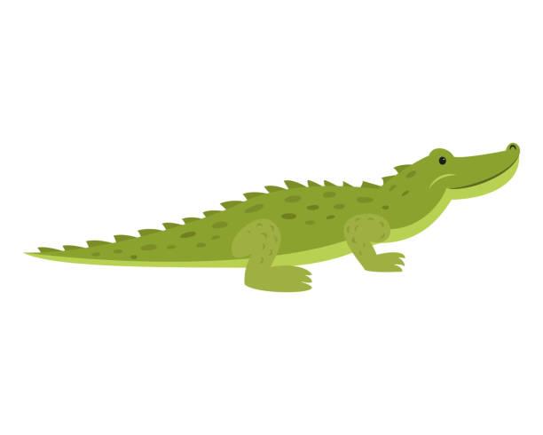 Cute crocodile on white background. Cute crocodile on white background. Vector illustration. crocodile stock illustrations