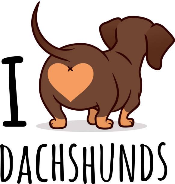 """bildbanksillustrationer, clip art samt tecknat material och ikoner med söt tax hund vektor tecknad illustration isolerad på vitt, """"jag älskar dachshunds"""" text bildtext. choklad-och tan wiener korv hund, bakifrån. rolig doxie butt, hund älskare, hus djur, djur tema. - tax"""