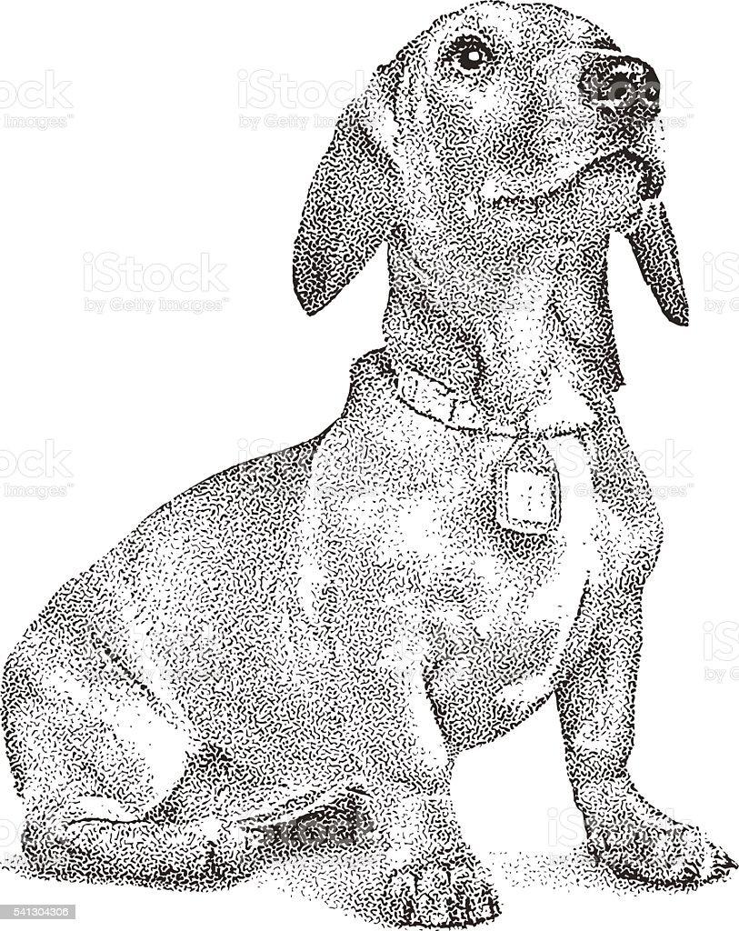 Cute Dachshund Puppy vector art illustration