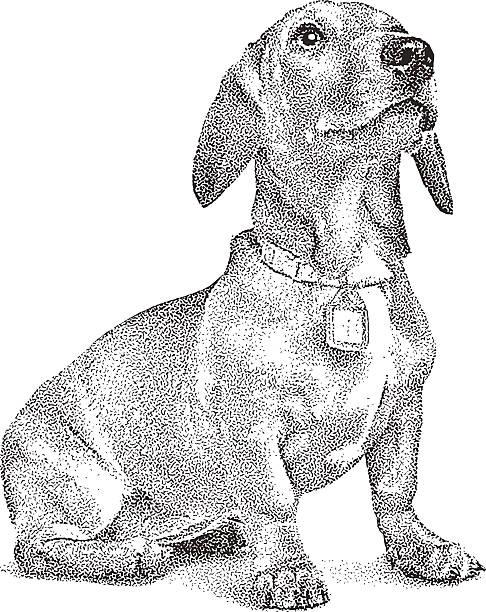 bildbanksillustrationer, clip art samt tecknat material och ikoner med cute dachshund puppy - tax