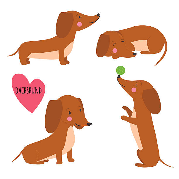 bildbanksillustrationer, clip art samt tecknat material och ikoner med cute dachshund set - tax