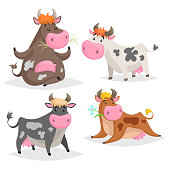 Cute different cows set. Standing, lying, relaxing and meditation poses. Chews green grass. Cartoon kid design style. Cheerful farm animals vector illustrations isolated on white background.