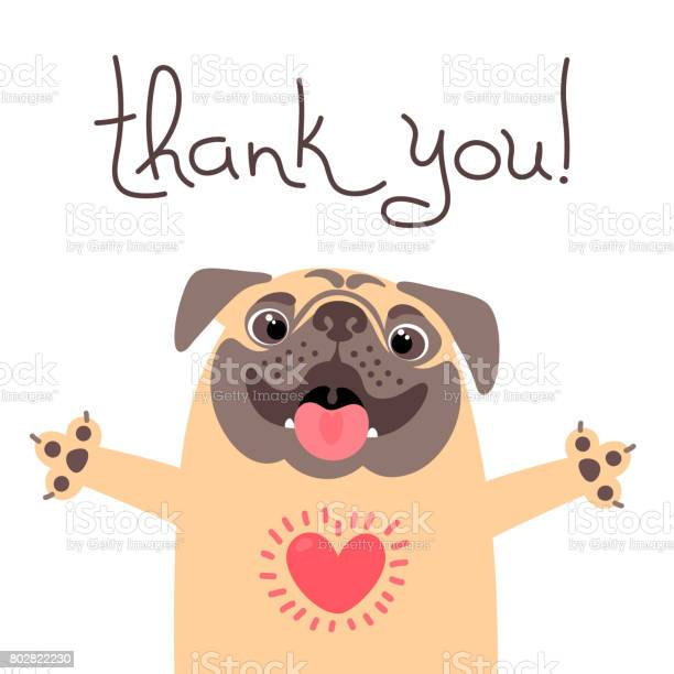 Cute dog says thank you pug with heart full of gratitude vector id802822230?b=1&k=6&m=802822230&s=612x612&h=ayqbyvtmgetw2f748hsqxgoxlrganendfqyrl21avfo=