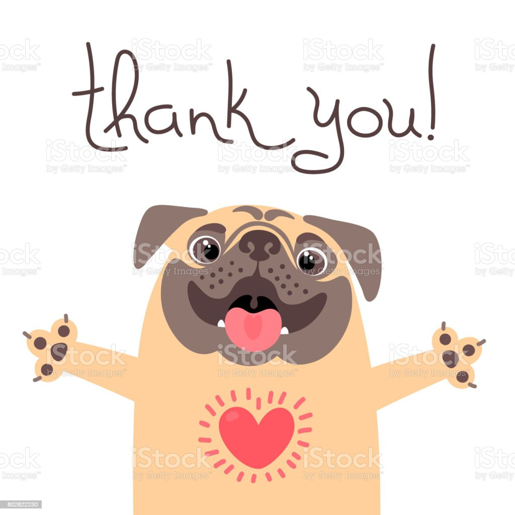 Cute dog says thank you. Pug with heart full of gratitude vector art illustration