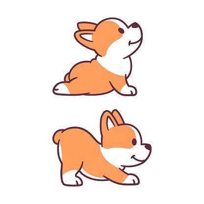 Cute dog yoga