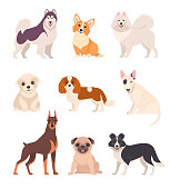 Vector illustration of cartoon different breeds dogs, such as alaskan malamute, corgi, samoyed, border collie, doberman pinscher and pug in flat style. Isolated on white.
