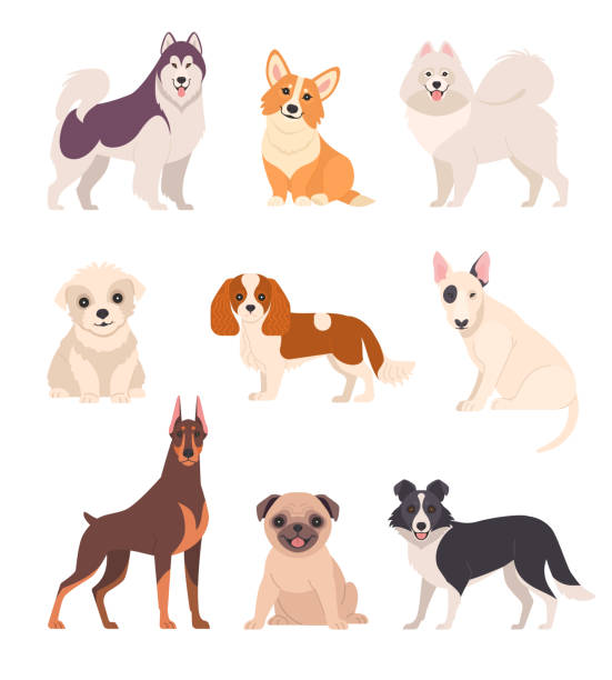 Cute dogs collection. Vector illustration of cartoon different breeds dogs, such as alaskan malamute, corgi, samoyed, border collie, doberman pinscher and pug in flat style. Isolated on white. sheepdog stock illustrations