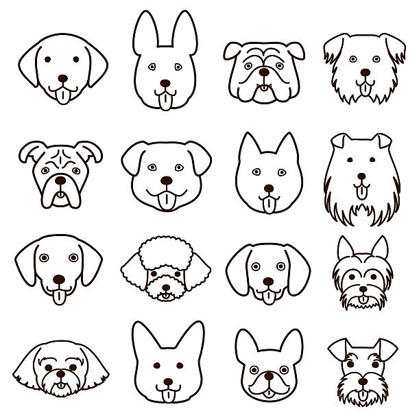 Line Drawing Dog Face : Royalty free australian shepherd clip art vector images