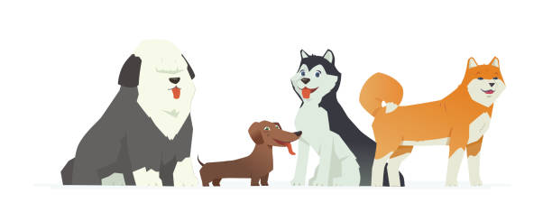 Cute dogs - modern vector cartoon characters illustration Cute dogs - modern vector cartoon characters illustration on white background. Different breeds of these pets, dachshund, bobtail, husky, akita inu. High quality composition for your banner, poster bobtail squid stock illustrations